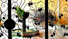 Cancell (Miss Mandarina) Tags: door topf25 fountain backlight bar contraluz reja puerta topf50 topf75 sony fuente catalonia explore porta font bodega carro porte cave catalunya grille cart topf100 fontaine fonte cellar catalua contrejour adega controluce contrallum viticultura winecellar celler carlzeiss charrette grata catalogne cancela wroughtirongate reixa explored 2013 carlzeisslenses altpeneds cancell provinciadebarcelona bodegastorres sonydsch20 pacsdelpeneds missmandarina fundacimigueltorres