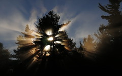 Sunrise (Dan Tristram Photography) Tags: light sun tree fog foggy explore rays burningbush universeofphotography