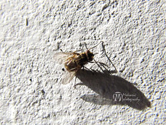 Fly poop on walls - photo#17