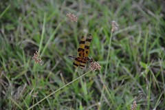 DSC_8668 (Nikosan Photographie) Tags: usa florida unitedstatesofamerica everglades evergladesnationalpark floride etatsunis