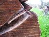 كانت... (Amalid) Tags: wood tree canon libya tripoli شجرة حطب خشب طرابلس ليبيا flickrandroidapp:filter=none