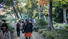 (alexkane) Tags: park old autumn trees light people orange man green fall nature girl leaves japan forest walking asian person japanese tokyo glasses leaf woods asia path weekend  japo japon nihon crowded japn  2013 xapn  6