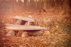 crossing (sephrocker) Tags: wood tree fall texture leaves forest 50mm soft dreamy