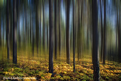 Troodos misty forest (Elias Lambrou) Tags: theacademytreealley