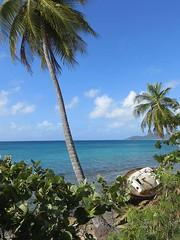 Shipwreck (marmotfotos) Tags: ocean tree boat puertorico palm shipwreck