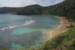 Hanauma Bay Nature Preserve, Oahu, Hawaii (katsuhiro7110) Tags: hawaii oahu disney shore tropicalisland honolulu waikikibeach kalakaua dvc koolinabeach kuhiobeach  disneyvacationclub hanaumabaynaturepreserve aulani 2014february hawaiifebruary2014