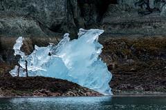 _MG_4829a (markbyzewski) Tags: alaska ugly iceberg tracyarm