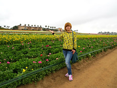 Back to the Flower Fields in Carlsbad, CA. (Bennilover, off till Feb. 13) Tags: camera flowers friends plants yellow spring pretty friendship ranunculus bulbs growing traveling visitor flowerfields springflowers yellowflowers younggirl carlsbadca canonsx50 wholesalegrowers