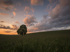 Always (Damian_Ward) Tags: sunset