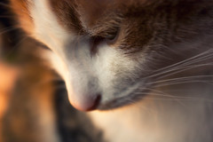 Thinking cat (Rubn Toquero) Tags: hairy face animal cat hair kitten soft pussy kitty bigotes whiskers domestic gato cabeza morro domestico pelo gatito pensamiento anatomia peludo suavidad conceptos partesdelcuerpo ruhey rubntoquerogonzlez anatomaanimal