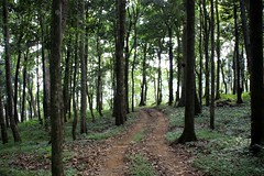 Woods close to Dare Nature Wayanad