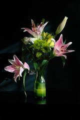* (najla sohaibani) Tags: pink flowers sun white black flower green yellow canon شمس goodmorning ورد goodevening gutenabend ورده وردي goodafternoon buonasera اخضر مساء اصفر ابيض akşamlar مساءالخير مساءالورد كانونالسعوديه