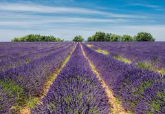 La Valle du Soleil (marypink) Tags: summer sky field landscape estate pov campagna campo lavander provence paesaggio provenza lavanda 2470mmf28 nikond7200