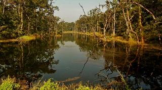 NEPAL, Royal Chitwan-Nationalpark, eine tolle Landschaft, 15338/8046
