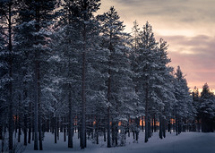 finnish forest (Steven-CH) Tags: eos5dmarkiv sattanen cloudy snow lapland travel finland twilight e75 rovaniementie forest canon europe trees dusk sodankyl㤠fi