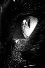 Eye of the mini tiger (E.Kg) Tags: cat eye macro extension tube closeup animal pet