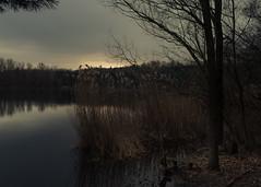 Lakeside Reflection (Netsrak) Tags: baum liblar liblarerseen see seen wasser lake tree trees water bäume reflektion reflection