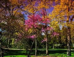 Luz,colores y primavera (Jotha Garcia) Tags: corralejos madrid españa spain arboles trees parqueelcapricho parque park jothagarcia nikon d3200 nikkor180550mmf3556 madriz colores colors marzo 2017 march spring primavera nikond3200