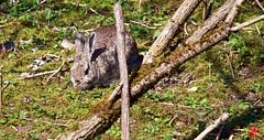 Les oiseaux m'ont posé un lapin ! (mamnic47 - Over 7 millions views.Thks!) Tags: saintquentinenyvelines yvelines basenautique img3604 lapins