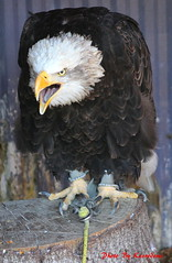 (71) Liberty's Owl Raptor & Reptile Centre