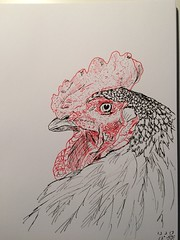 A rooster a day, day 13 (anviss) Tags: tekening illustratie schets haan kip rooster chicken black stabilo uniball red zwart rood
