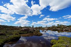 20170301-38-Cloud reflections in tarn (Roger T Wong) Tags: australia greatpinetier np nationalpark sel1635z sony1635 sonya7ii sonyalpha7ii sonyfe1635mmf4zaosscarlzeissvariotessart sonyilce7m2 tasmania wha wallsofjerusalem worldheritagearea alpine bushwalk camp clouds hike landscape trektramp walk