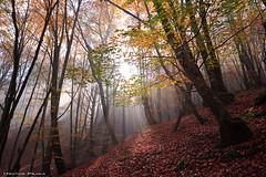 Tempus fugit (Hector Prada) Tags: bosque otoño árbol sol rayos niebla hojas forest path down autumn tree sunbeams sun leaves pais vasco basque country