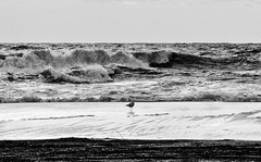 Seagull alone (Fabio Cafà) Tags: wow sea waves wave seagull ocean beach blackandwhite nikon allaperto nicepic pictures d7000 fabiocafa