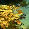 Did Someone Say Autumn? (A. Walden) Tags: galleryoffantasticshots