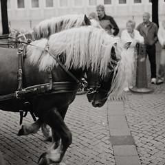 Horsepower (tealeg) Tags: bw white black film canon iso100 645 hannover bronica sw analogue hanover 6x45 weiss canoscan schwarz foma 65mm fomapan rf645 zenza 8800f zenzanon