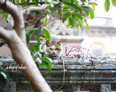 Today's cat 2013.8.31 (ladious666) Tags: life animal cat catsplanet