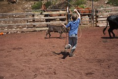 BlackMountainColoradoRanch_50 (greeblehaus) Tags: ranch family summer vacation horses mountains bunny colorado cows donkey dude bryan aimee declan rabbits freinds blackmountain horsebackriding dominick roping bmr blackmountainranch coloradoduderanch cattlewoods