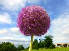 Seen in a Bordeaux garden.