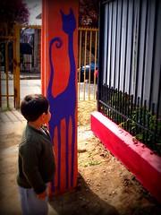 Renato. (Felipe Smides) Tags: cat mural gato pintura smides felipesmides