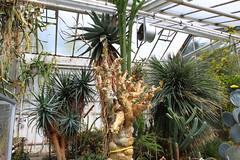 Botanischer Garten - Gieen 02 (Stefan_68) Tags: cactus germany garden deutschland hessen palmtree garten palme hesse kaktus kaktee giesen