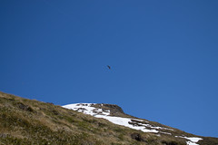 13042013-IMG_2249.jpg (johnny.farquet) Tags: animaux oiseaux gypatebarbu