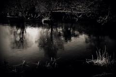 the pond (Kristine Bergheim) Tags: fjre grimstad dmmesmoen