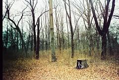 (Berilac) Tags: trees film 35mm lomo lca xpro lomografa lomography procesocruzado rboles crossprocessing kodakelitechromeeb100