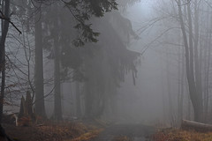 _DSC6670 im Nebelwald - in the cloud forest (baerli08ww) Tags: mist fog forest germany landscape nikon nebel natur landschaft wald rheinlandpfalz westerwald rhinelandpalatinate blinkagain bestofblinkwinners blinksuperstars