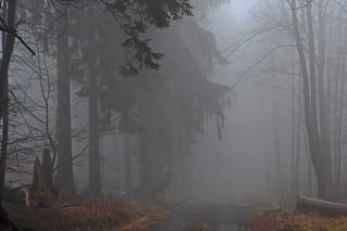 _DSC6670 im Nebelwald - in the cloud forest