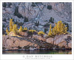 Trees, Granite Shoreline, Afternoon Light (G Dan Mitchell) Tags: california park trees light usa mountain lake reflection nature rock america print landscape high afternoon nevada north stock shoreline surface canyon sierra kings alpine national license granite wilderness range sequoia seki glaciated