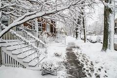 Snow-7925