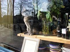 Ruben's Cat (indigo_jones) Tags: flowers roses sun holland window netherlands sunshine bar cat reflections kat utrecht nederland alcohol rubens dieren zon bloemen raam nieuwegracht horeca proeflokaal winkelpoes