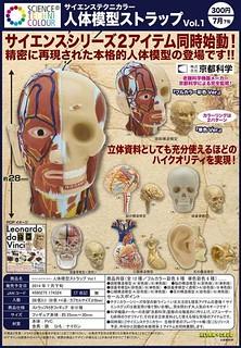 奇譚俱樂部 人體解剖模型吊飾 轉蛋