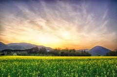 Ultime luci a Torreglia (tampurio) Tags: light sunset sky italy panorama sun sunlight colors sunrise landscape italia tramonto sony hill hills luci tramonti sole paesaggi paesaggio colline padova campi collieuganei colza colli torreglia slta58