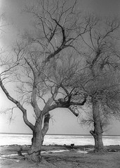 Foreman Park... Pultneyville, NY (vincenzooli) Tags: trees ny newyork ice tmax lakeontario pultneyville