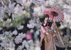 花見@新宿 (umeshuroku) Tags: 桜 sakura e6 hanami canoneos300 花見 agfactprecisa100iso