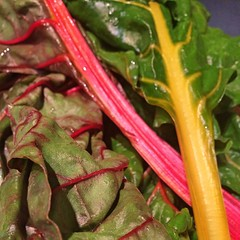 "Swiss Chard is on our dinner menu tonight. With sausage , bone broth, and pasta, it will be a delicious meal. I love to grow Swiss Chard in our garden as much as I love to eat it at our family table. I also love how pretty it is.   What's for dinner at yo • <a style=""font-size:0.8em;"" href=""http://www.flickr.com/photos/54958436@N05/33175200012/"" target=""_blank"">View on Flickr</a>"