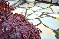 View from the bridge (Katie Karch) Tags: garden moss maple patio slate