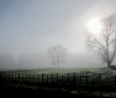 Misty Morning In Winter (Mary Faith.) Tags:
